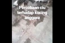 Viral Video Kucing Mati Dicekoki Air Kelapa, Polisi Lakukan Penyelidikan
