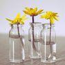 3 Langkah Menanam Tanaman di Botol, Solusi untuk Lahan Terbatas