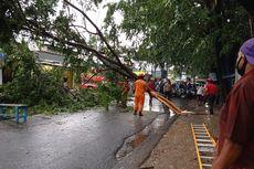 Hujan dan Angin Kencang, Pohon Tumbang di Cinere