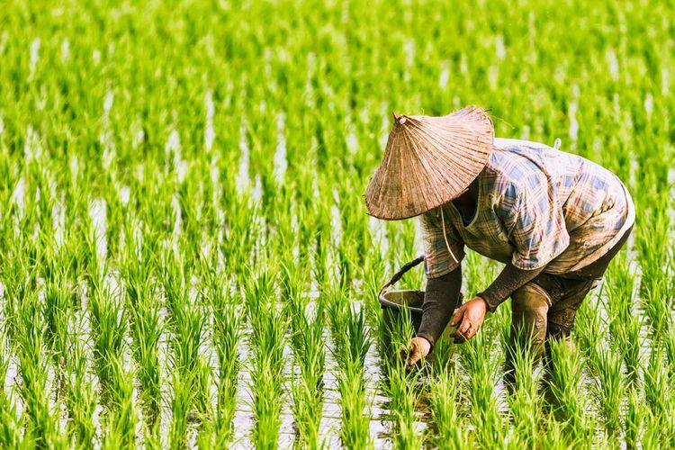 Lindungi Petani dan Peternak, Asuransi Pertanian Siap Diterapkan Serentak Tahun 2021