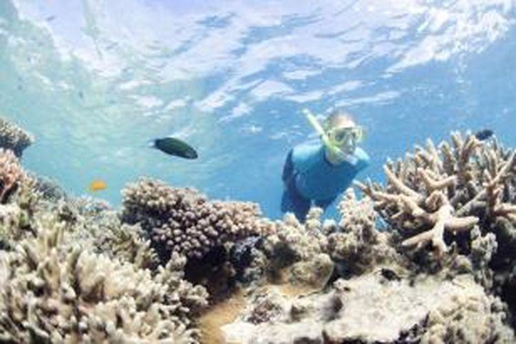 Great Barrier Reef di sepanjang garis pantai Queensland, daerah timur Australia, adalah surga bagi para penyelam di seluruh dunia.