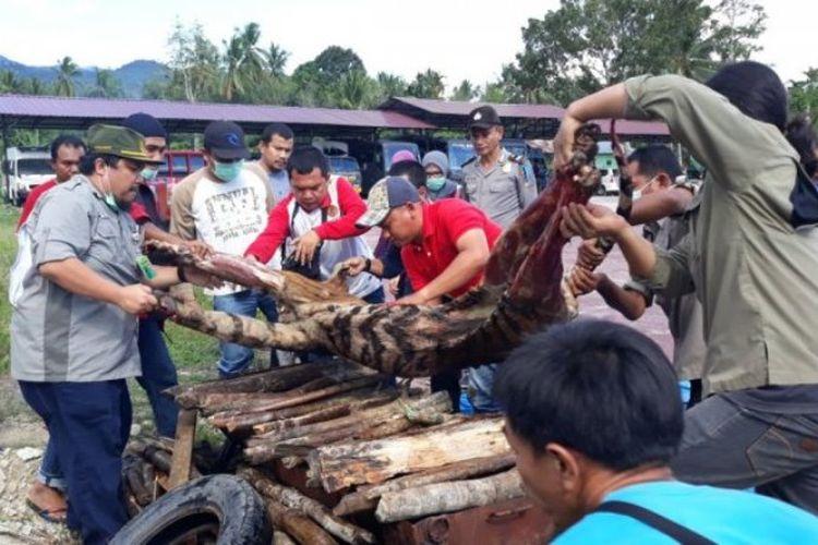 Harimau Sumatera yang mati dibunuh warga dimusnahkan di Polres Mandailing Natal dengan cara dibakar. Mirisnya, saat dievakuasi, anggota tubuh harimau sudah tidak utuh didiuga diambil mafia perdagangan satwa liar.