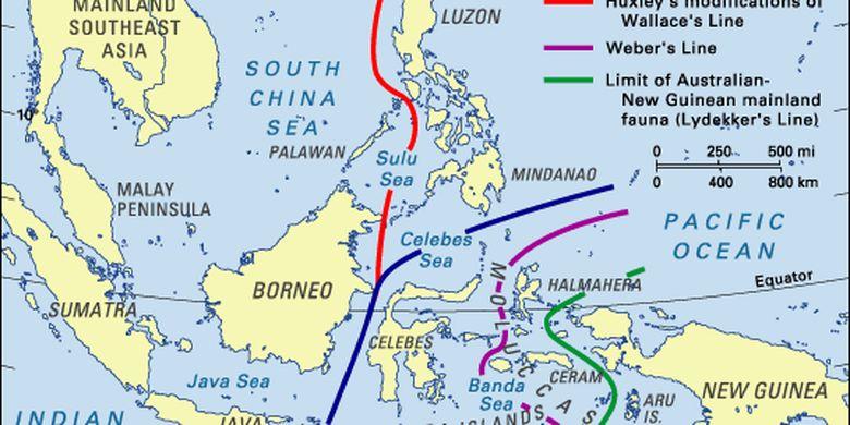 Persebaran Flora Dan Fauna Di Indonesia Halaman All Kompas Com