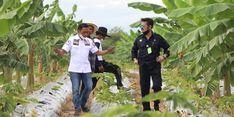 Kembangkan Pertanian Tanah Air, Kementan Dorong Fasilitasi KUR Rp 70 Triliun
