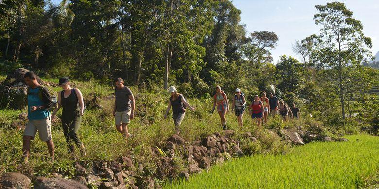 Turis Belgia menyusuri persawahan di Mbeling, Desa Gurung Liwut, Kecamatan Borong, Manggarai Timur, Flores, NTT, Senin (14/8/2017). Desa Gurung Liwut menawarkan wisata ekologi kepada turis mancanegara dan Nusantara.