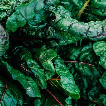 Ilustrasi sayuran kale.