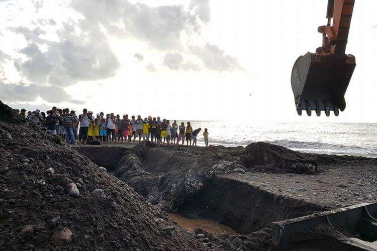 Paus yang terdampar di pantai Kota Ternate, Maluku Utara akhirnya dikubur, Minggu (20/8/2017)