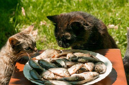Apakah Ikan Salmon Bagus untuk Kucing? Ini Penjelasan Dokter Hewan