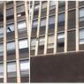 Luar Biasa, Kucing Terjun dari Lantai 5 Gedung dan Selamat