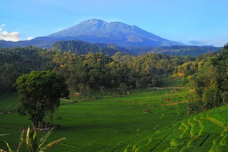 Ilustrasi gunung - Pemandangan Gunung Ciremai dan persawahan.