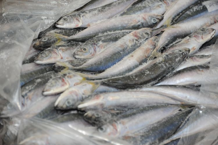 Ikan beku di dalam cold storage