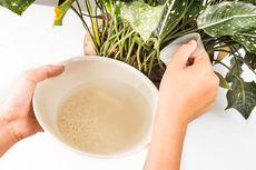 [POPULER FOOD] Manfaat Air Bekas Cucian Beras | Resep Kue Putri Mandi