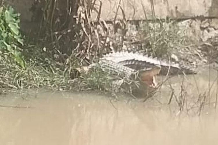 Buaya muara yang berjemur di pinggiran Sungai Kepoh, Pangkalpinang.