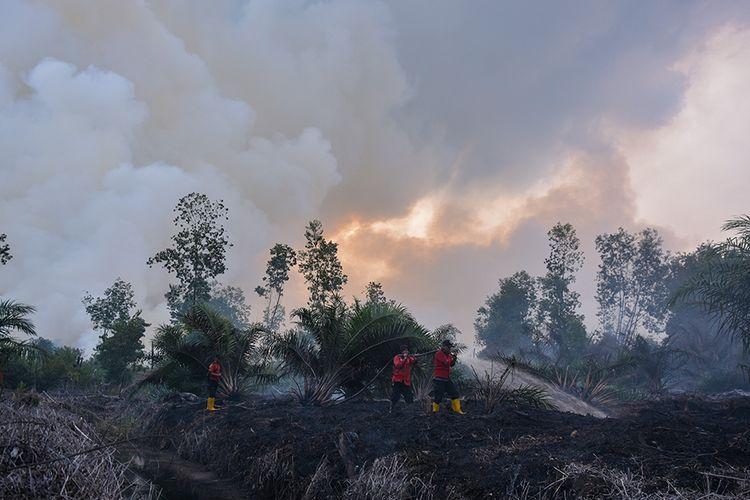 Sejumlah petugas pemadam kebakaran PT Riau Andalan Pulp and Paper (RAPP) berusaha memadamkan kebakaran lahan gambut di Desa Penarikan Kecamatan Langgam Kabupaten Pelalawan, Riau, Minggu (28/7/2019). Upaya Satgas Karhutla Riau untuk memadamkan kebakaran hutan dan lahan tidak bisa optimal akibat angin kencang dan cuaca kering yang mengakibatkan sumber air mengering.