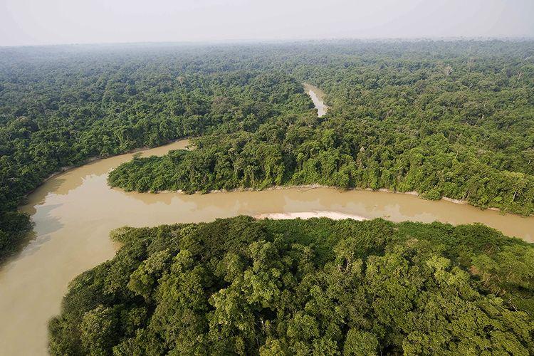 Hutan Amazon.