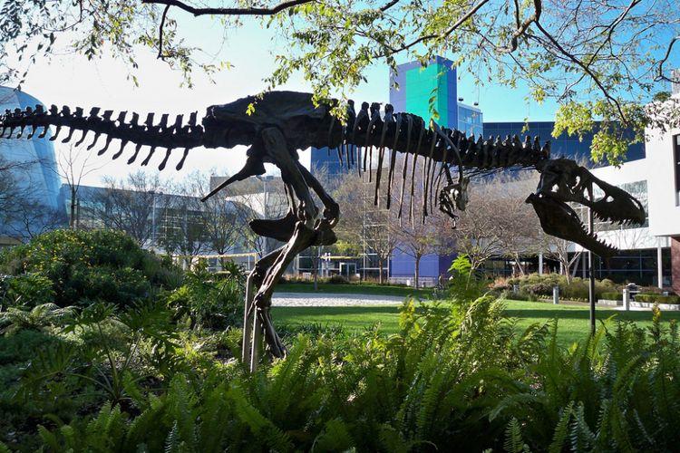 Kerangka T-Rex di kantor pusat Google di kawasan Silicon Valley, Amerika Serikat.