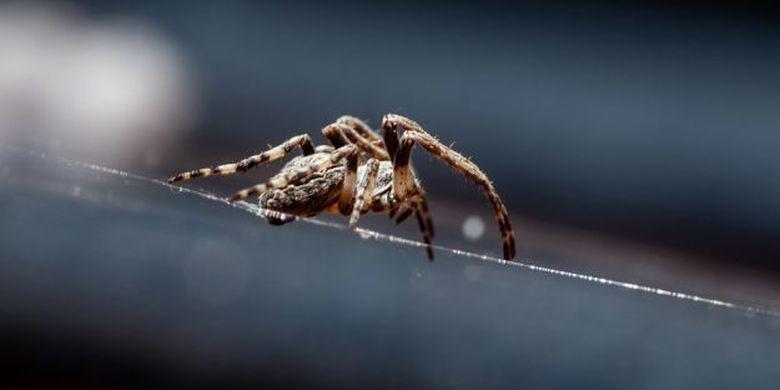 Dokter temukan ada laba-laba kecil yang bersarang di telinga seorang pria.