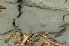 Sebanyak 6.546 KK di Manggarai Timur, Flores, NTT Terancam Kelaparan