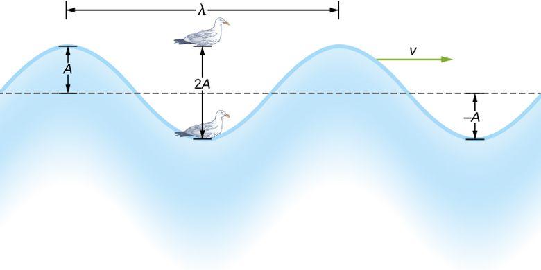Panjang gelombang pada gelombang transversal