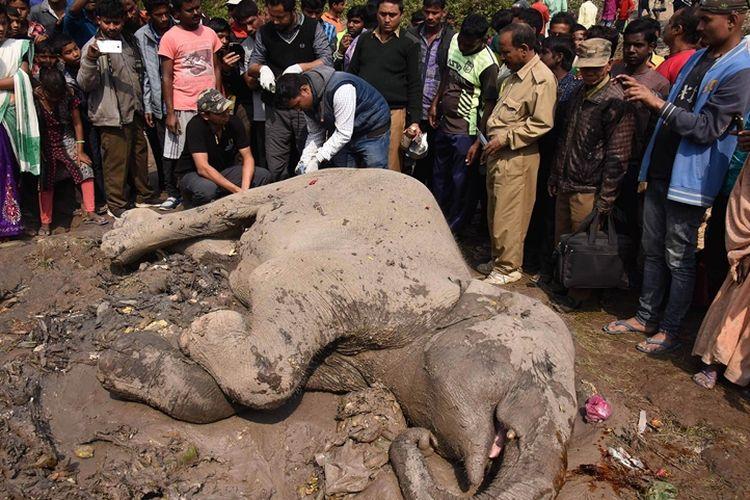 Warga melihat gajah liar yang terluka akibat tertabrak kereta di dekat stasiun kereta Habaipur di distrik Hojai, Minggu (11/2/2018).