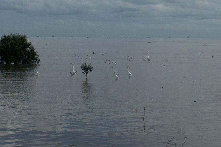 Pemandangan di Bagan Percut yang menjadi habitat burung migran dan burung penetap.