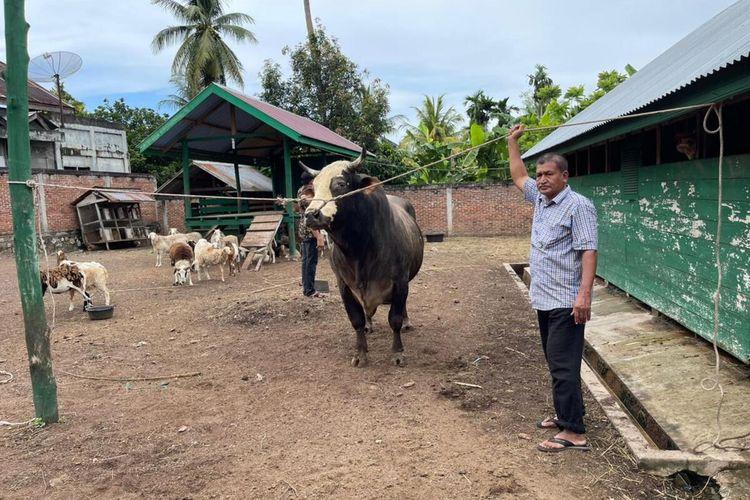 Putro ijo, sapi jenis Brahman ini dipilih Presiden Joko Widodo untuk dikurbankan kepada masyarakat Kabupaten Aceh Besar. Putro ijo memiliki berat 1,02 ton, dan dibeli dari peternak di Kabupaten Aceh Besar.