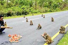 Monyet di India Terapkan Social Distancing Saat Diberi Makan