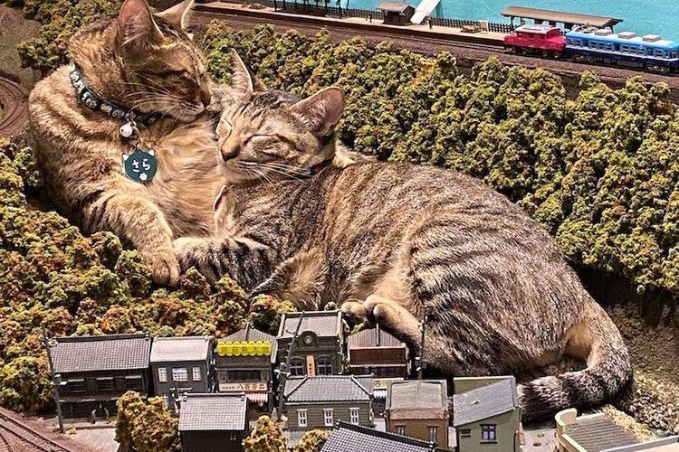 Kucing di diorama kereta api, Diorama Restaurant, Osaka.