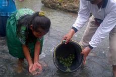 Warga Desa Lepas 1.000 Kura-kura dan 20.000 Ikan ke Sungai Tempuran
