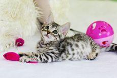 5 Manfaat Memberikan Mainan Interaktif pada Kucing