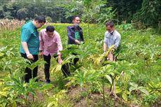 Tergiur Harga Tinggi, 700 Petani di Semarang Beralih Tanam Porang