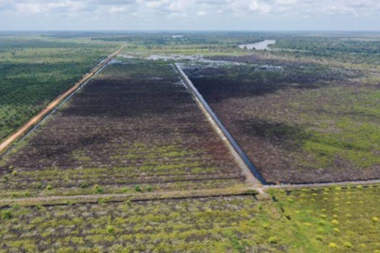 Salah satu areal lahan perusahaan pemegang konsesi yang diduga tidak melakukan restorasi gambut.