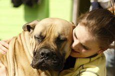 7 Perilaku Manusia yang Dibenci Anjing