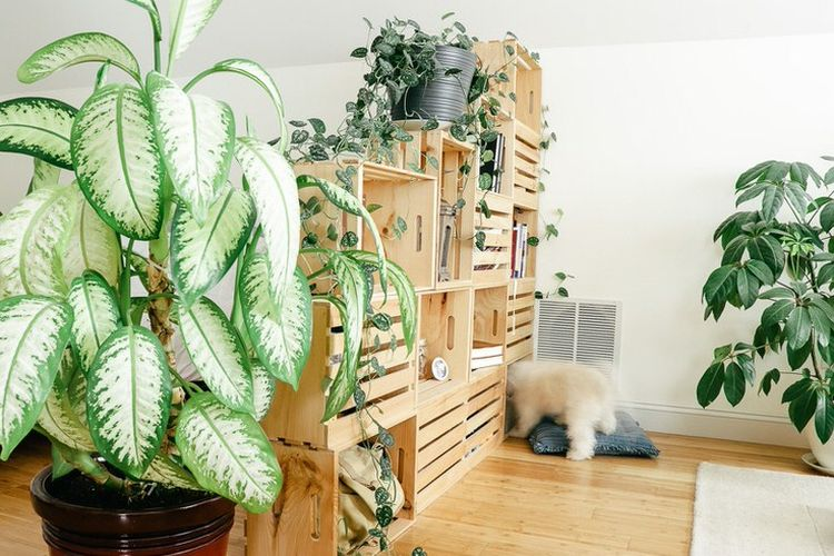 Penyekat ruangan sekaligus plants holder