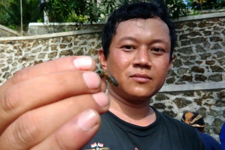 Seorang tim evakuasi Sarang Tawon di Gunung Api Purba Nglangeran, Heru Purwanto menunjukkan lebah yang sudah mati, Jumat (23/11/2018).