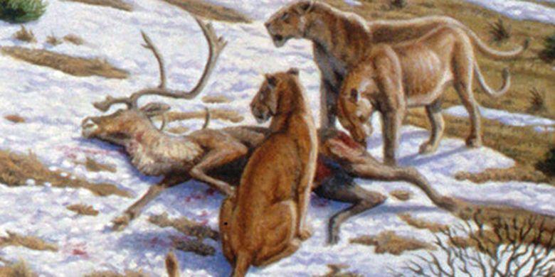 Singa gua yang punah (Panthera leo spelaea) dengan bangkai rusa. Singa gua kemungkinan besar tidak memiliki surai, membuat mereka tidak menarik bagi singa Afrika.