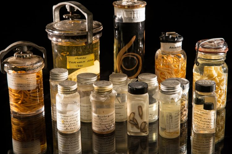Macam-macam spesimen dari koleksi parasit Smithsonian.