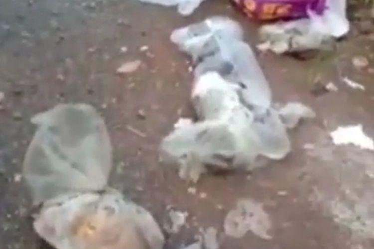 Sebanyak 20 kucing ditemukan mati dengan kondisi mengenaskan di Banjarmasin, Kalsel, Sabtu (6/2/2021).