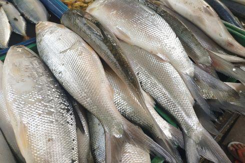 4 Cara Membersihkan Sisik Ikan, Perhatikan Posisi Pisau