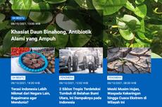 [POPULER SAINS] Khasiat Daun Binahong, Antibiotik Alami   Terasi Indonesia Lebih Nikmat dari Negara Lain