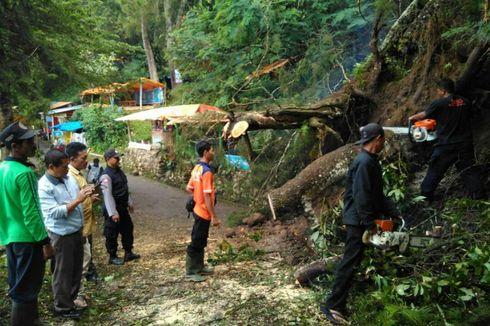 Hujan Disertai Angin Kencang, Pohon Tumbang Tutup Jalan ke Telaga Sarangan