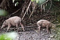 Bentang Alam Popayato-Paguat Rumah Besar Keragaman Hayati