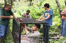 Beruang Madu Terlihat Sedang Makan Durian, BKSDA Pasang Perangkap