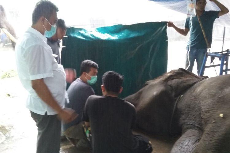 Proses nekropsi Gajah Yanti Taman Rimba Jambi pada Kamis (8/10/2020). Dokumen BKSDA Jambi.