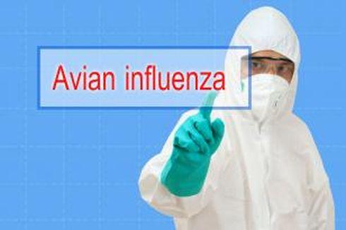 Indonesia Waspadai Virus Flu Burung dari China
