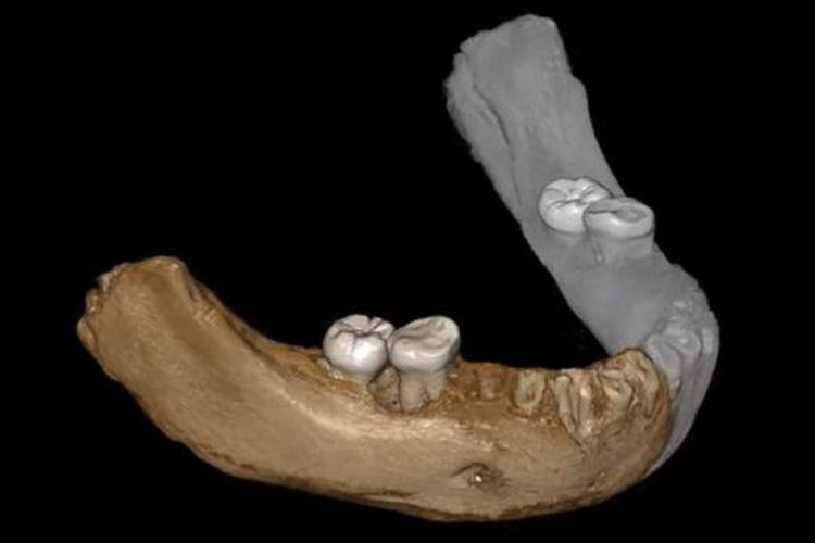 Tulang rahang bawah Xiahe ditemukan pada 1980 di gua karst Baishiya.