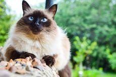 Kenapa Kucing Menyukai Tempat yang Tinggi? Ternyata Ini Alasannya