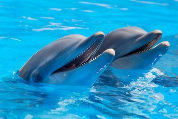 Studi: Bahasa Siul Manusia Bisa Jadi Cara untuk Berkomunikasi dengan Lumba-lumba