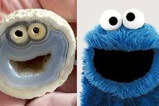 Temuan Batu Akik Langka, Bentuknya Mirip Kartun Cookie Monster