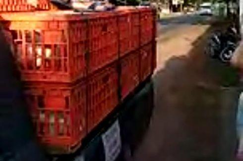 Harga Ayam Ikut Terdampak Corona, 12 Juta Pekerja Terancam PHK
